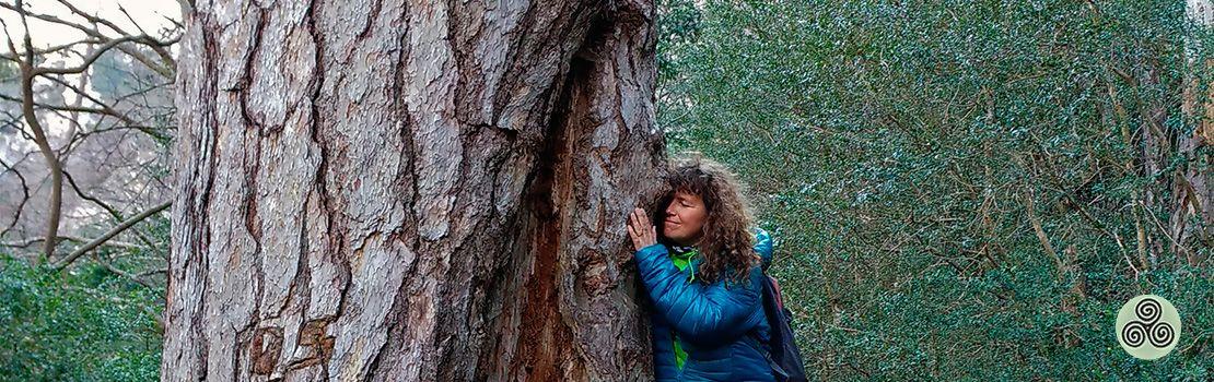 abraçada arbre