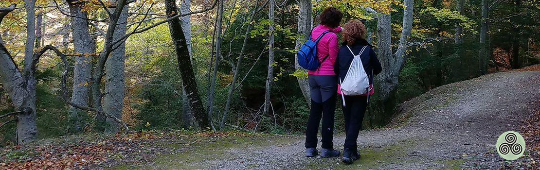 caminant al bosc
