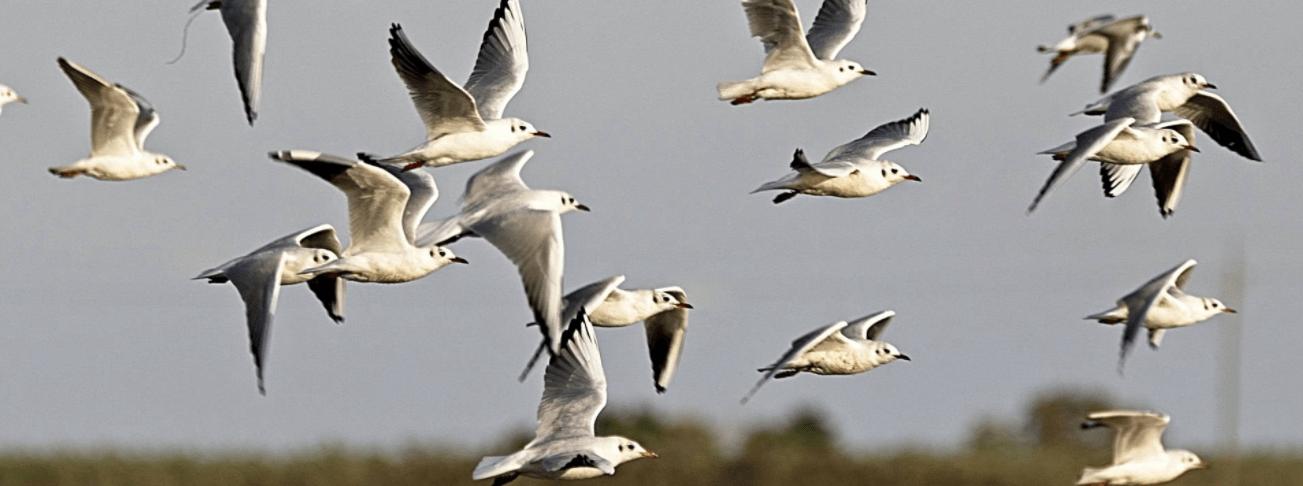 Birding Slider 3